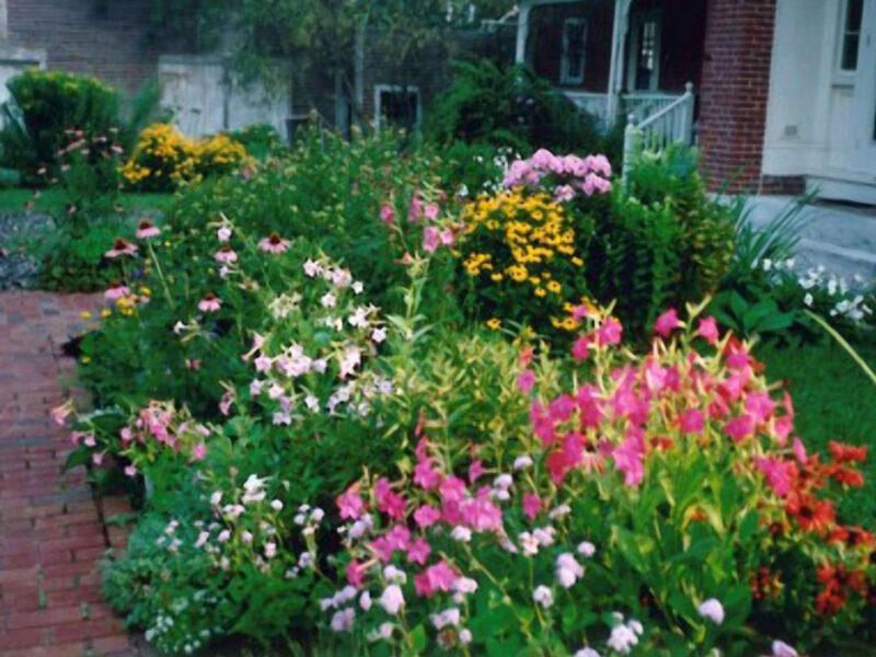 Continual bloom in the perennial garden