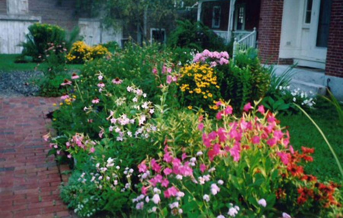 Continual bloom in the perennial garden